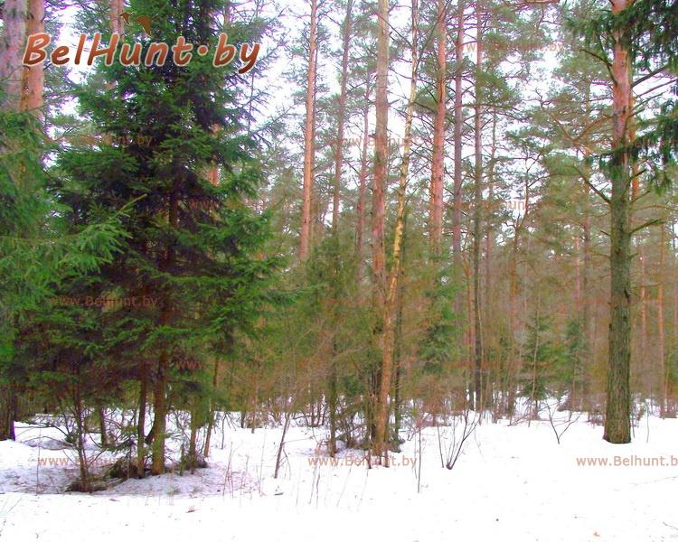 охотхозяйство Молодечненский лесхоз